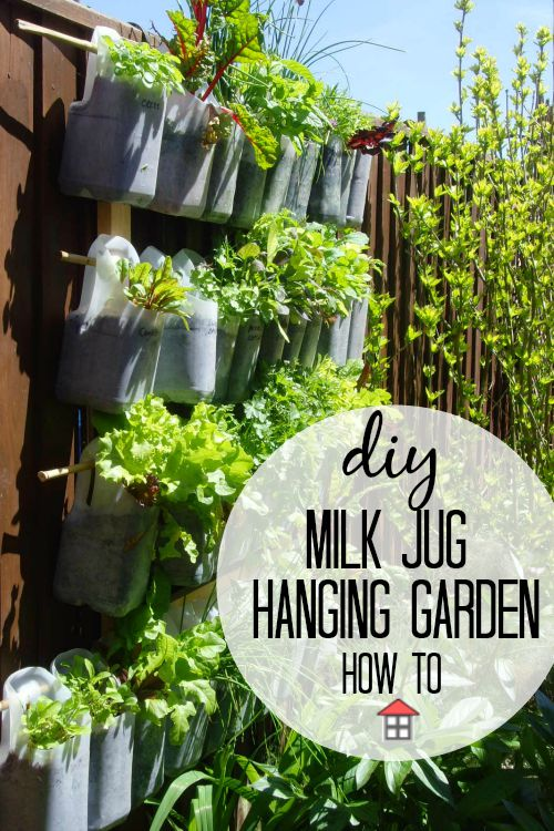 What a perfect way to make use of unused space to grow health, delicious and frugal food. Plus, this milk jug hanging garden uses my waste. Amazing.